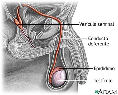 what is semen